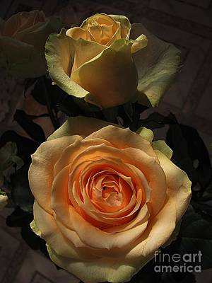 Photograph - Roses Forever_2 by Halyna  Yarova