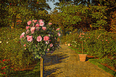 Photograph - Roses In The Garden by Marianne Campolongo
