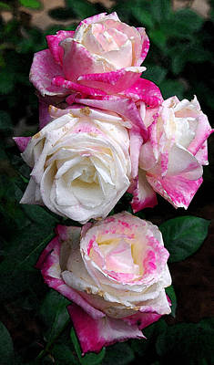 Photograph - Roses by James C Thomas