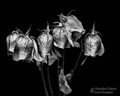 Photograph - Roses Of Memories Past - Bw by Christopher Holmes