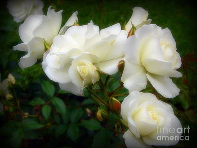 Photograph - Roses Of York by Priscilla Richardson