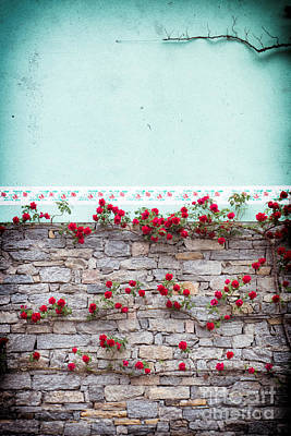 Photograph - Roses On A Wall by Silvia Ganora