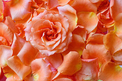 Photograph - Roses by Peter Lakomy