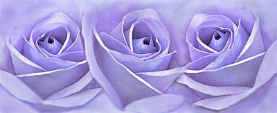 Photograph - Three Roses Lavender Floral by Jennie Marie Schell