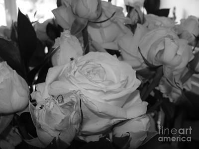 Photograph - Roses by Tiziana Maniezzo