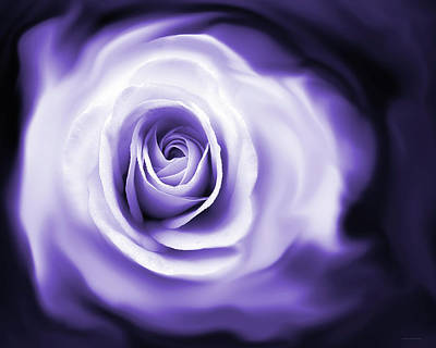 Photograph - Rose's Whisper Purple by Jennie Marie Schell