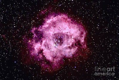 Monoceros Photograph - Rosette Nebula In Monoceros by John Chumack