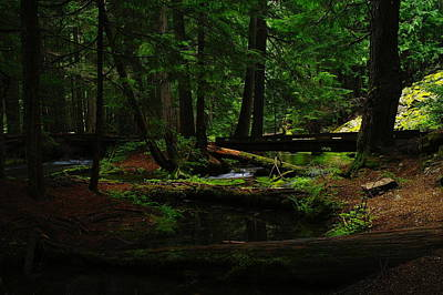 Long Leaf Pine Photograph - Ross Creek Montana by Jeff Swan