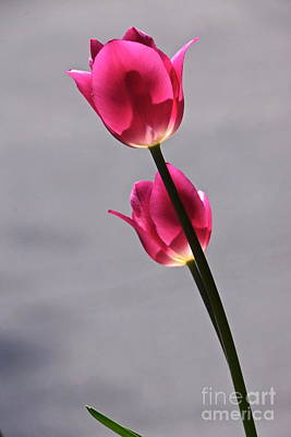 Photograph - Rosy Loveliness For A Gray Day by Byron Varvarigos