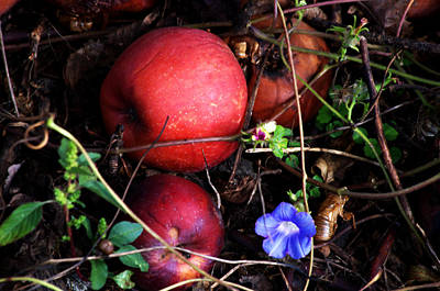 Photograph - Rotten Apples by Cathy Shiflett
