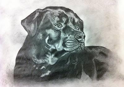 Rottweiler Dog Drawing - Rottie by Erin Filan