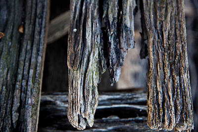 Photograph - Rotting Timber by Carole Hinding