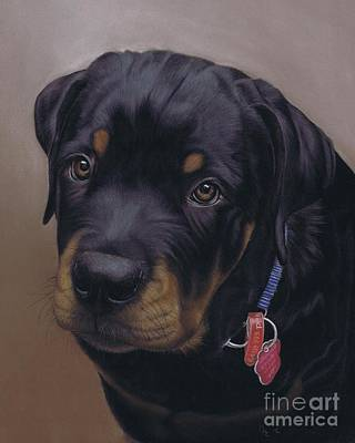 Pastel - Rottweiler Dog by Karie-Ann Cooper