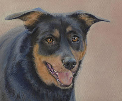 Art Print featuring the painting Rottweiler - Drawing by Natasha Denger