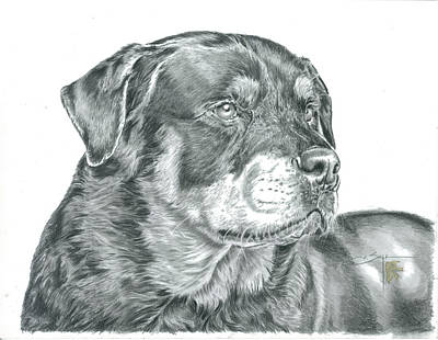 Rottweiler Puppy Drawing - Rottweiler  by Elizabeth Sage