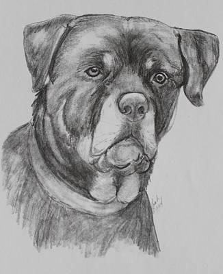 Rottweiler Dog Drawing - Rottweiler by Lorah Buchanan