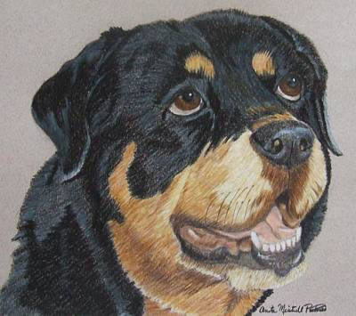 Drawing - Rottweiler Portrait by Anita Putman