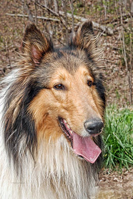 Rough Collie Print by Kenny Francis