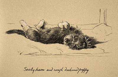 Cute Puppy Drawing - Sealyham by Cecil Charles Windsor Aldin