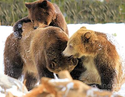 Grizzly Bear Photograph - Rough-housing by Adam Jewell