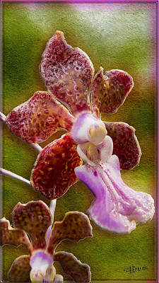 Photograph - Rough Neighborhood Orchid by Roy Foos