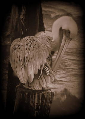 Photograph - Rough Seas Pelican by Sheri McLeroy