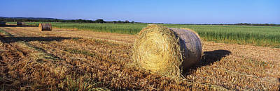 Bail Photograph - Round Bales Of Hay Tx by Panoramic Images
