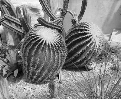 Photograph - Round Cactus  by Monique Montney