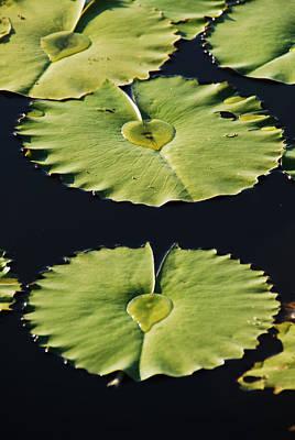Photograph - Round Love Lily-pad Hearts by Ankya Klay