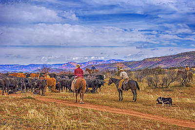 Working Cowboy Photograph - Rounding Up Cattle In Cornville Arizona by Priscilla Burgers