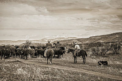 Working Cowboy Photograph - Rounding Up Cattle In Cornville Arizona Sepia by Priscilla Burgers
