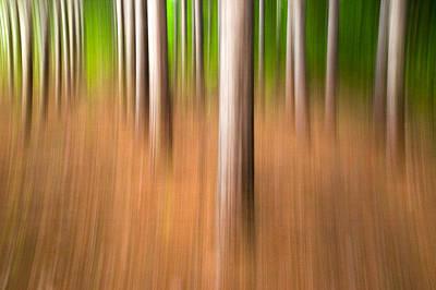 Photograph - Row By Row. Streaky Trees by Rob Huntley