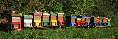 In A Row Photograph - Row Of Beehives, Switzerland by Panoramic Images