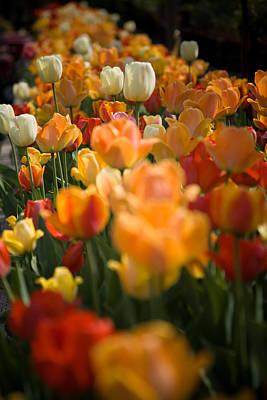 Photograph - Row Of Colorful Tulips by Jeff Folger