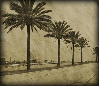 Bokhe Photograph - Row Of Palms by Malania Hammer