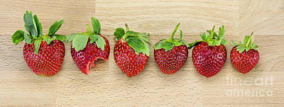 Strawberry Bunch Photograph - Row Of Strawberries  by Svetlana Sewell