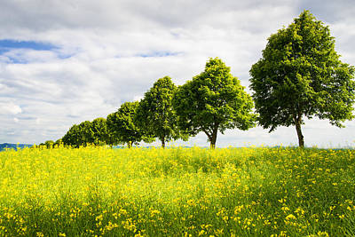 Row Of Trees In Spring Landscape Green And Yellow Art Print by Matthias Hauser