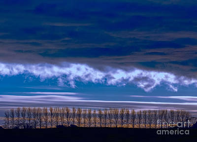 Photograph - Row Of Trees by Jim Orr