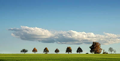 Photograph - Row Of Trees by Thomas Winz