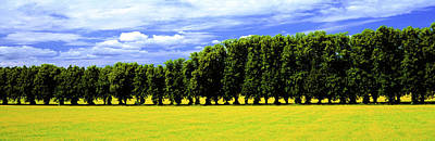 Row Of Trees Photograph - Row Of Trees, Uppland, Sweden by Panoramic Images