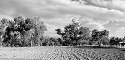 Photograph - Rows Bw by Elizabeth Sullivan
