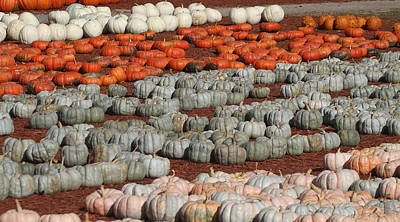 New Years - Rows Of Pumpkins 4 by Cathy Lindsey