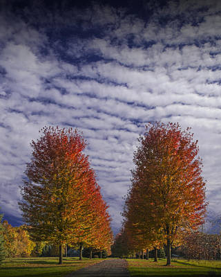 Photograph - Rows Of Red Autumn Trees With Cirus Clouds by Randall Nyhof