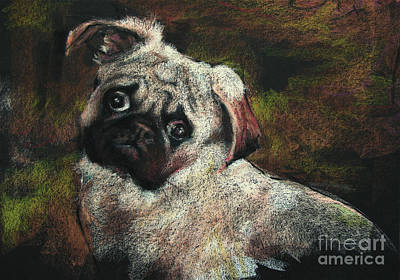 Puppy Drawing - Roy The Magnificent by Shelley Schoenherr