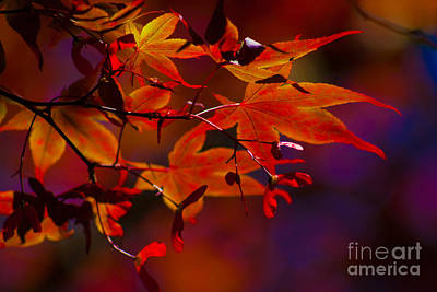 Royal Autumn A Art Print by Jennifer Apffel