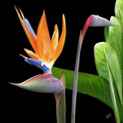 Royal Beauty II - Bird Of Paradise Art Print