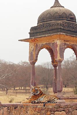 Royal Bengal Tiger At The Cenotaph Print by Jagdeep Rajput