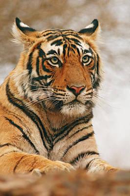 Royal Bengal Tiger Photograph - Royal Bengal Tiger On The Rock by Jagdeep Rajput