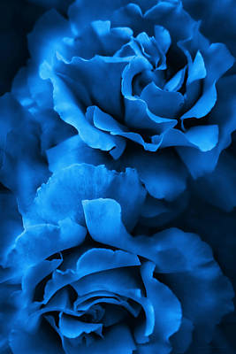 Photograph - Royal Blue Roses by Jennie Marie Schell