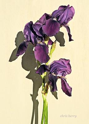 Photograph - Royal Purple Iris Still Life by Chris Berry